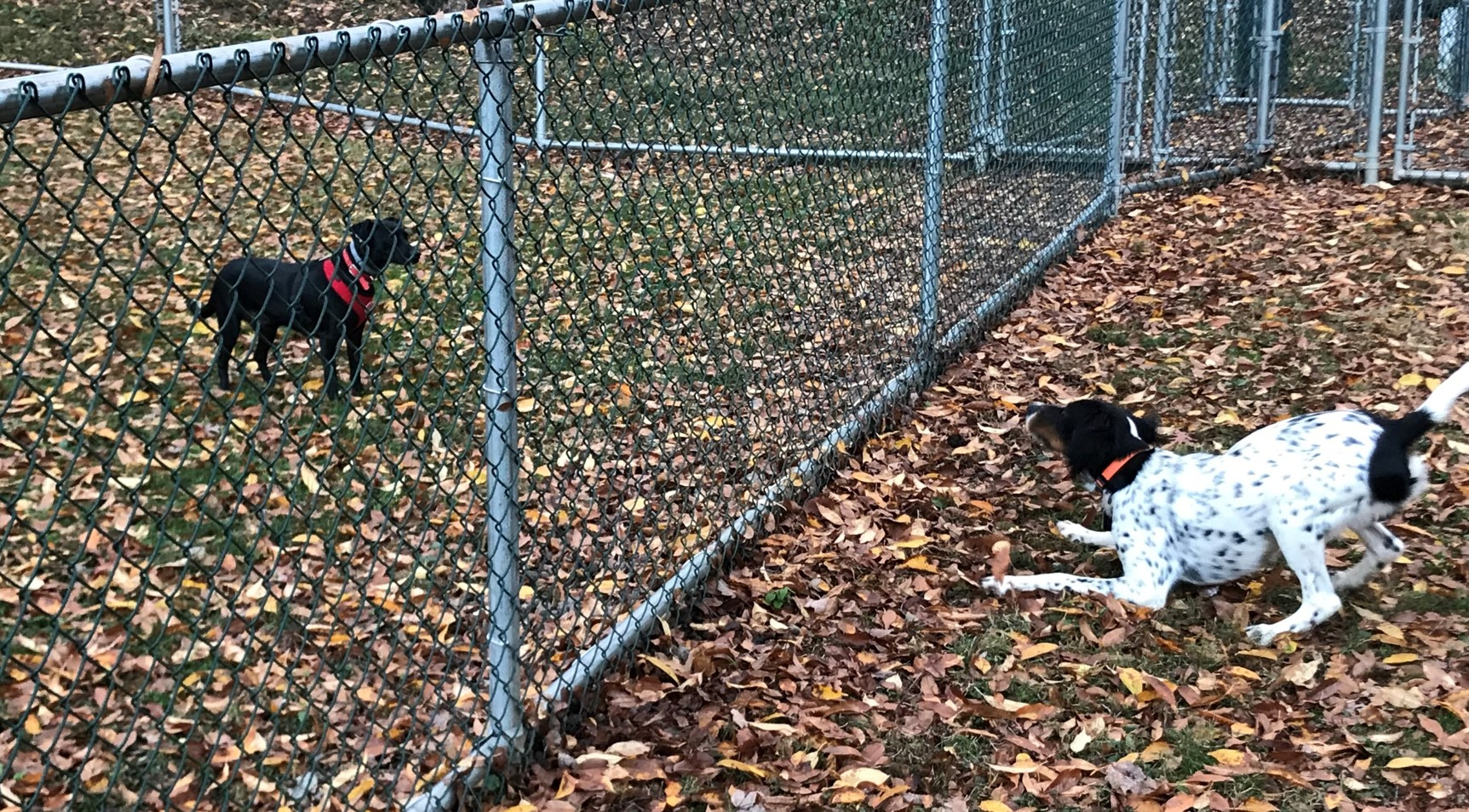 Canine Curiosity, Stark Dog Park, Shamokin Dam
